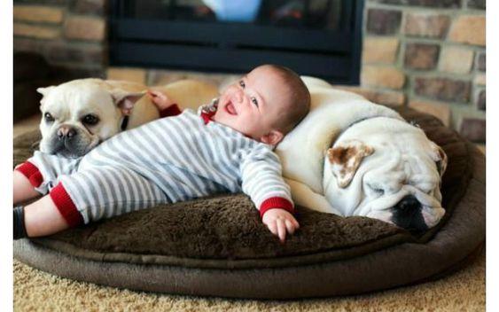 2 chú chó bulldog Anh