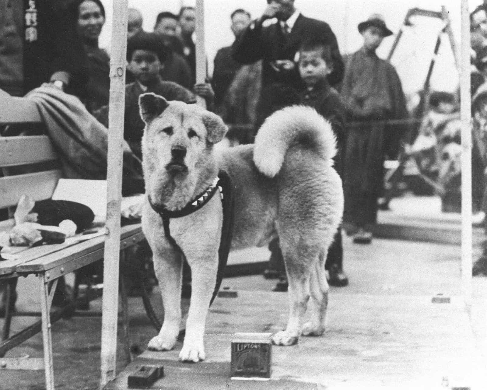 Akita Hachicho