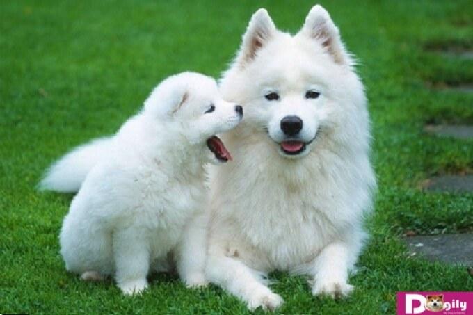 Bệnh xà mâu ở chó là gì?