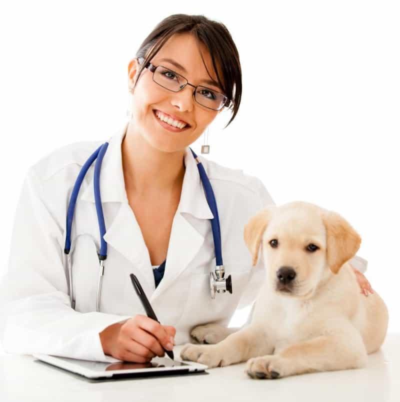 cách chữa cún bị hóc xương