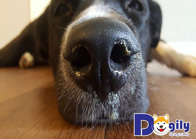 Cách phòng bệnh cho chóCách phòng bệnh cho chó