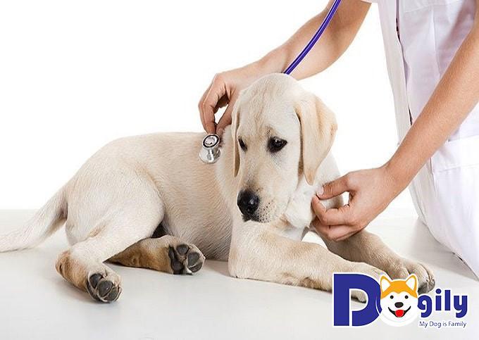 Cân đưa các bé đến bệnh viện thú y gân nhất để kiểm tra