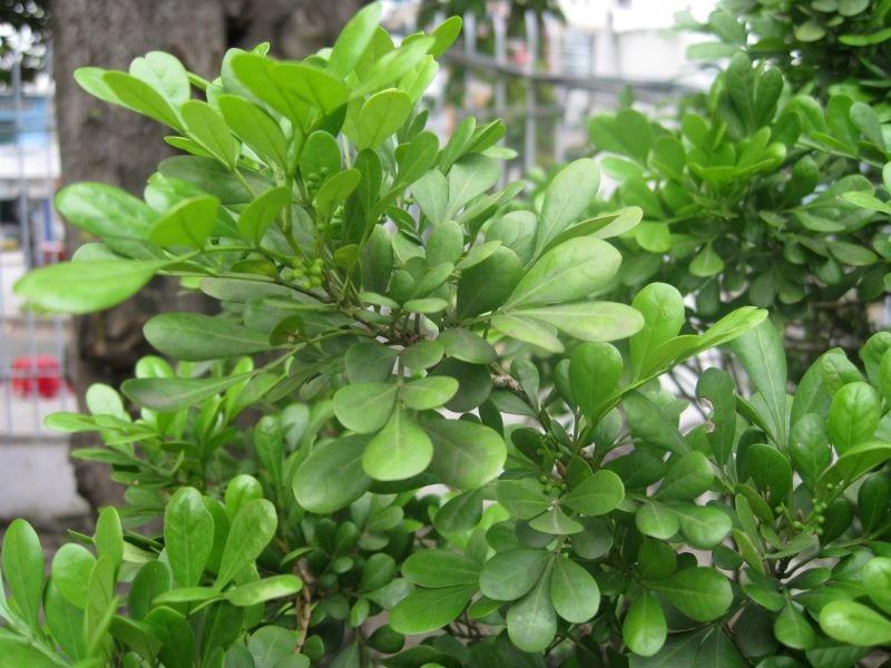 Cay Ngau 11 800x600