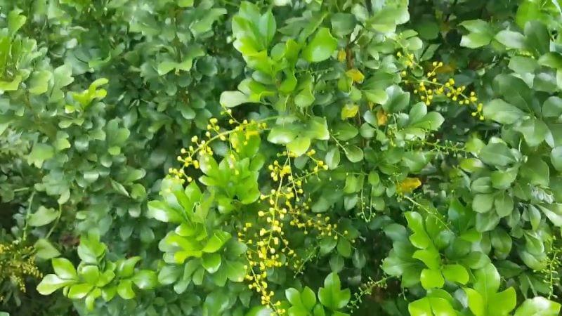 Cay Ngau 91 800x450
