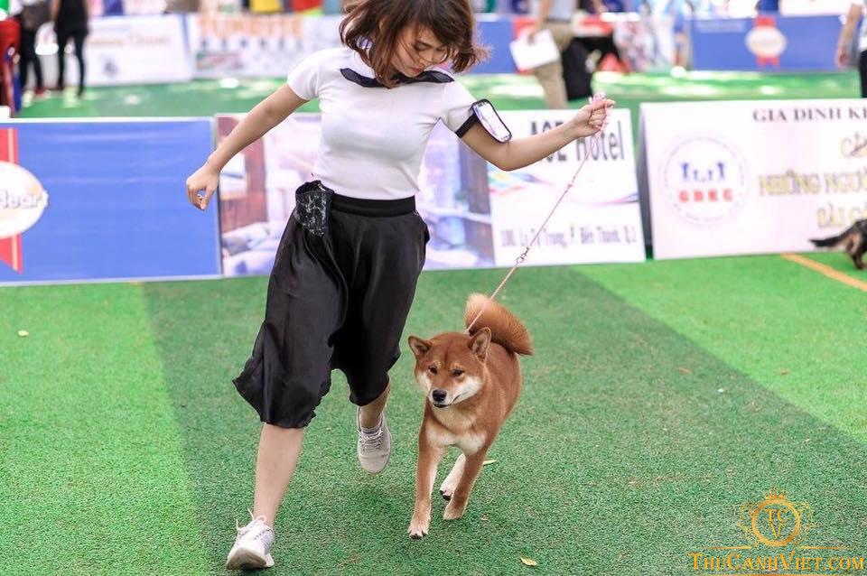 Chó akita inu dễ dàng thực hiện các bài tập huấn luyện 1 cách đơn giản