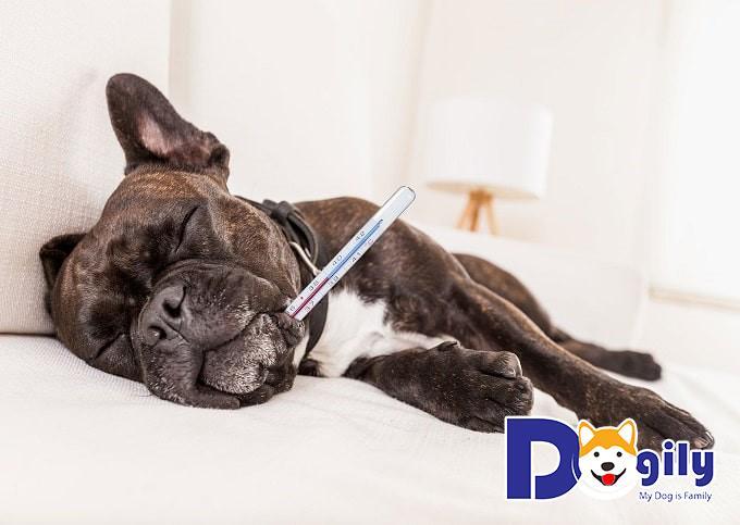 Chó bị nôn gây ra ảnh hưởng như thế nào?