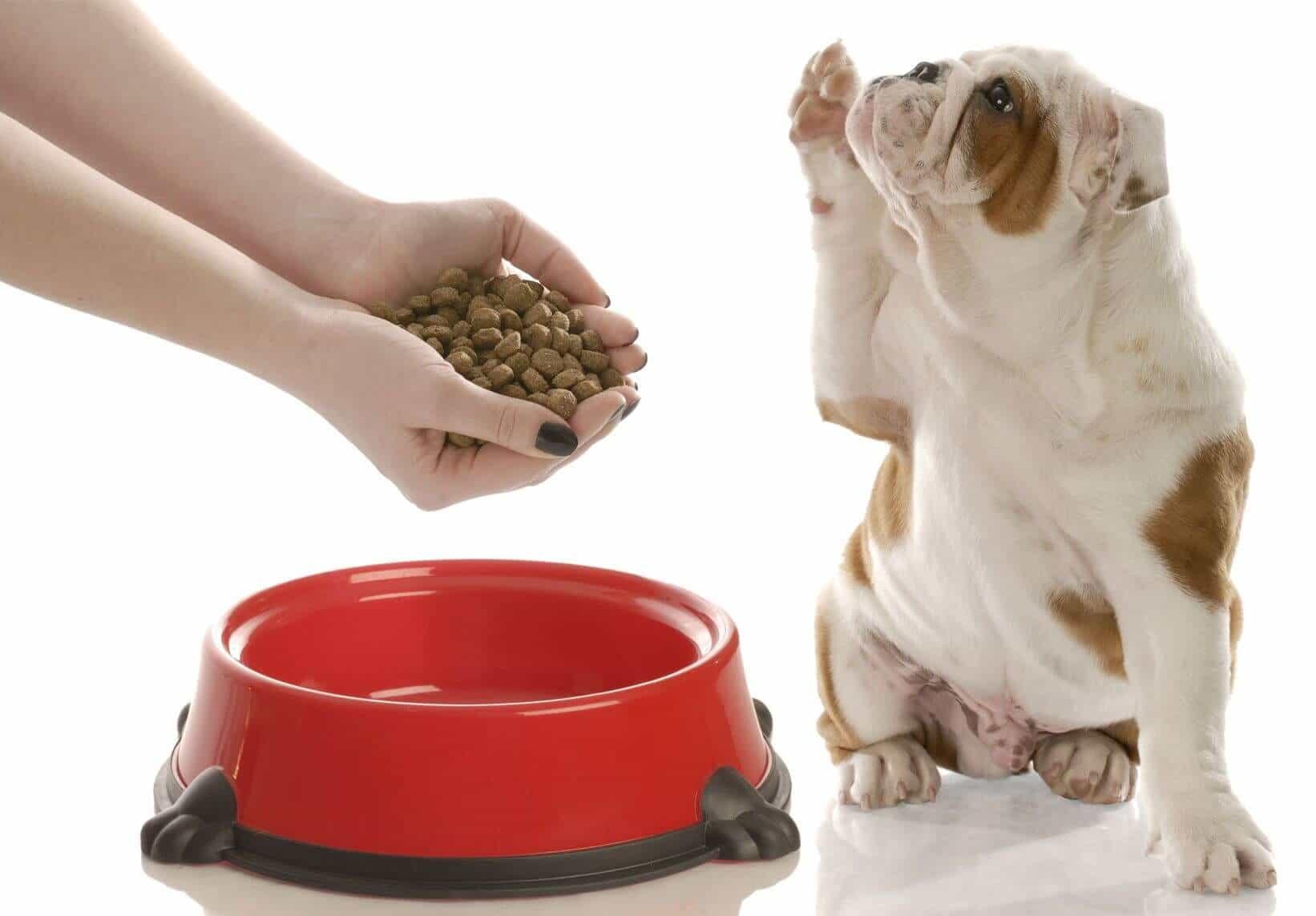 Chó biếng ăn do không phải thức ăn nó thích