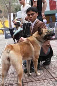 Chó Mông Cộc tự vệ
