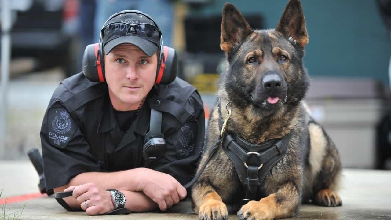 Chú chó nghiệp vu và cảnh sát Mỹ