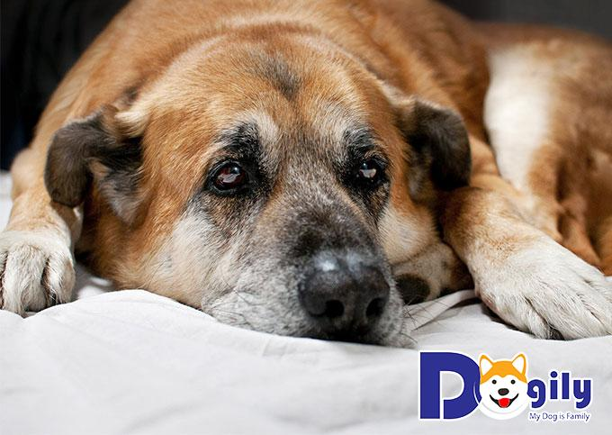 Có rất nhiều chú chó bị bệnh đường ruột