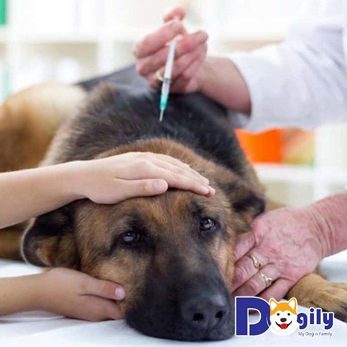 Cún cưng có thể sốt cao lên đến 40 độ