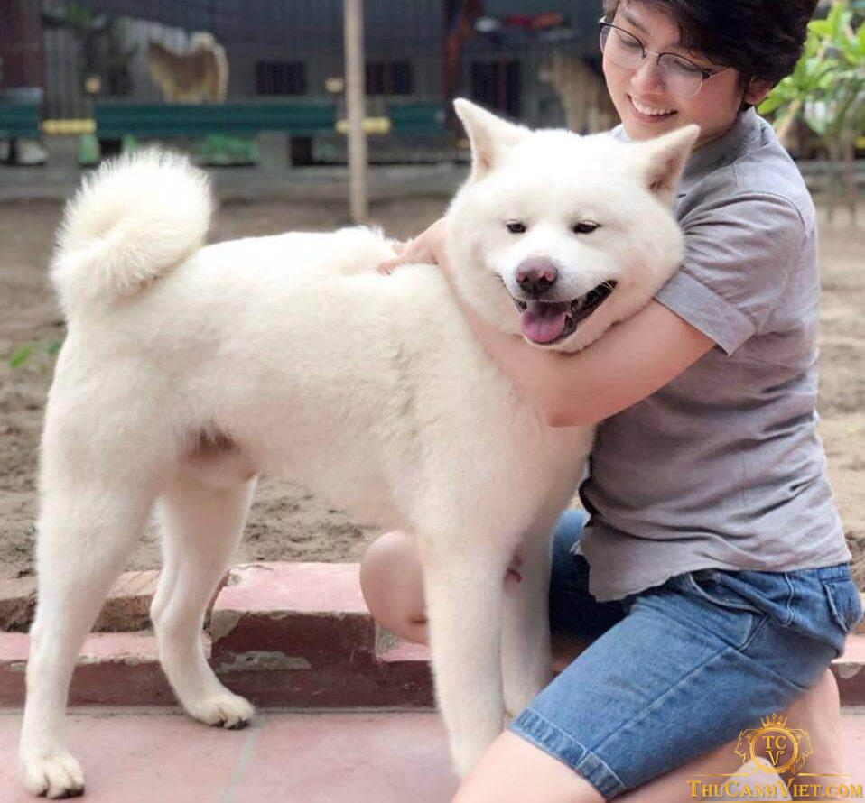 Đặc điểm nhận dạng chó akita inu