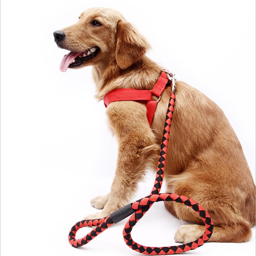 Dây Nylon huấn luyện chó