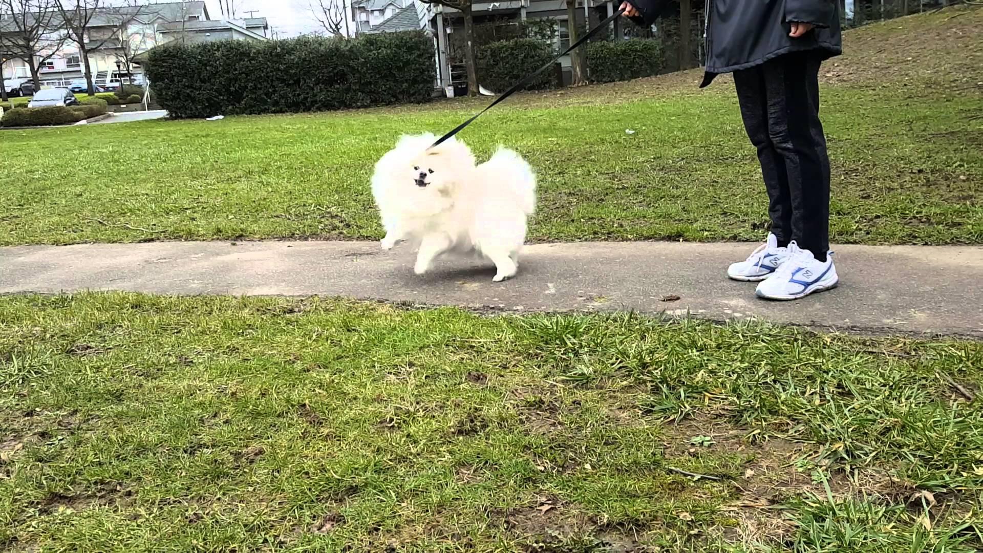 Eskimo đi dạo