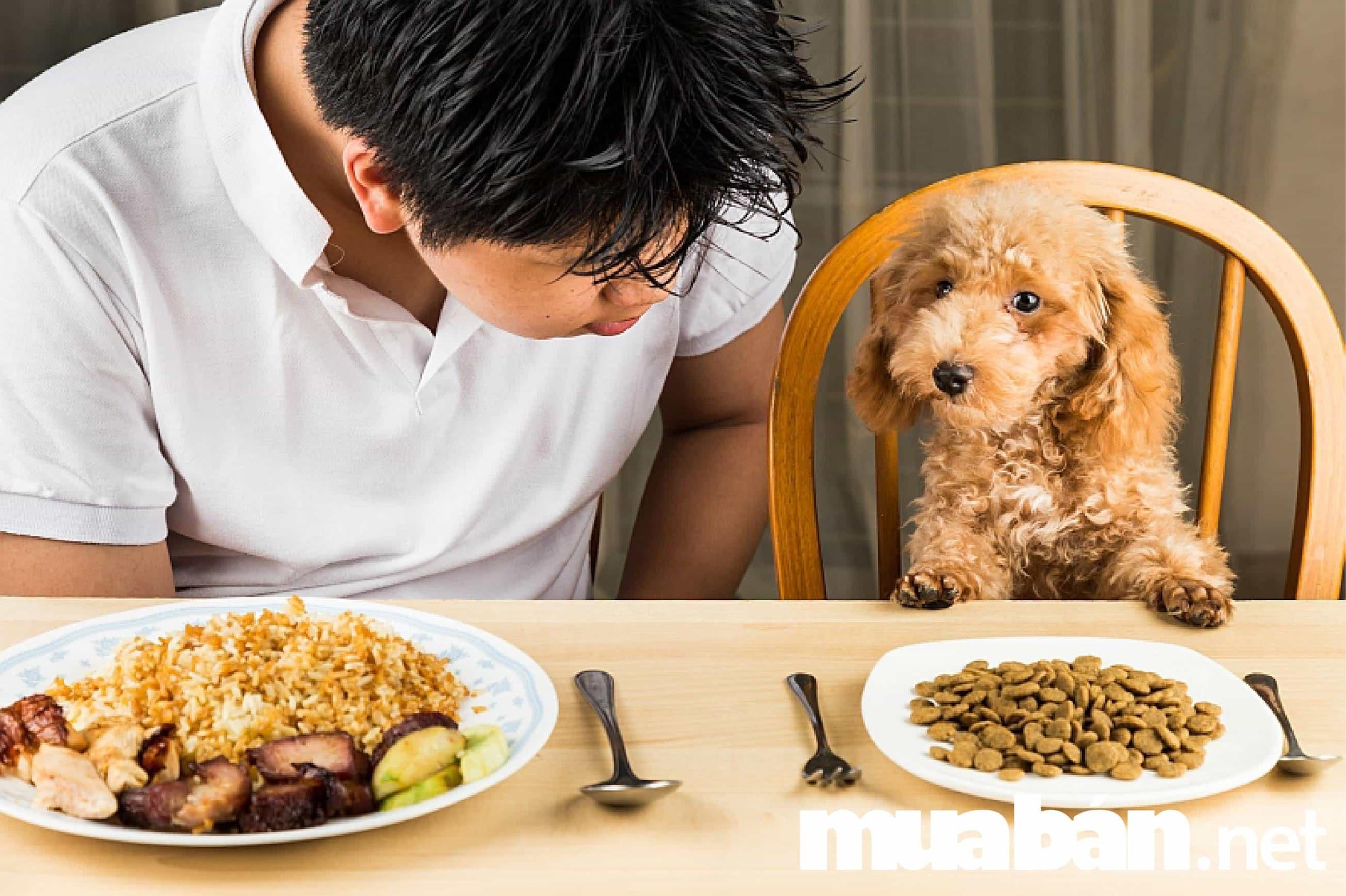 Lượng thức ăn huấn luyện chó biếng ăn