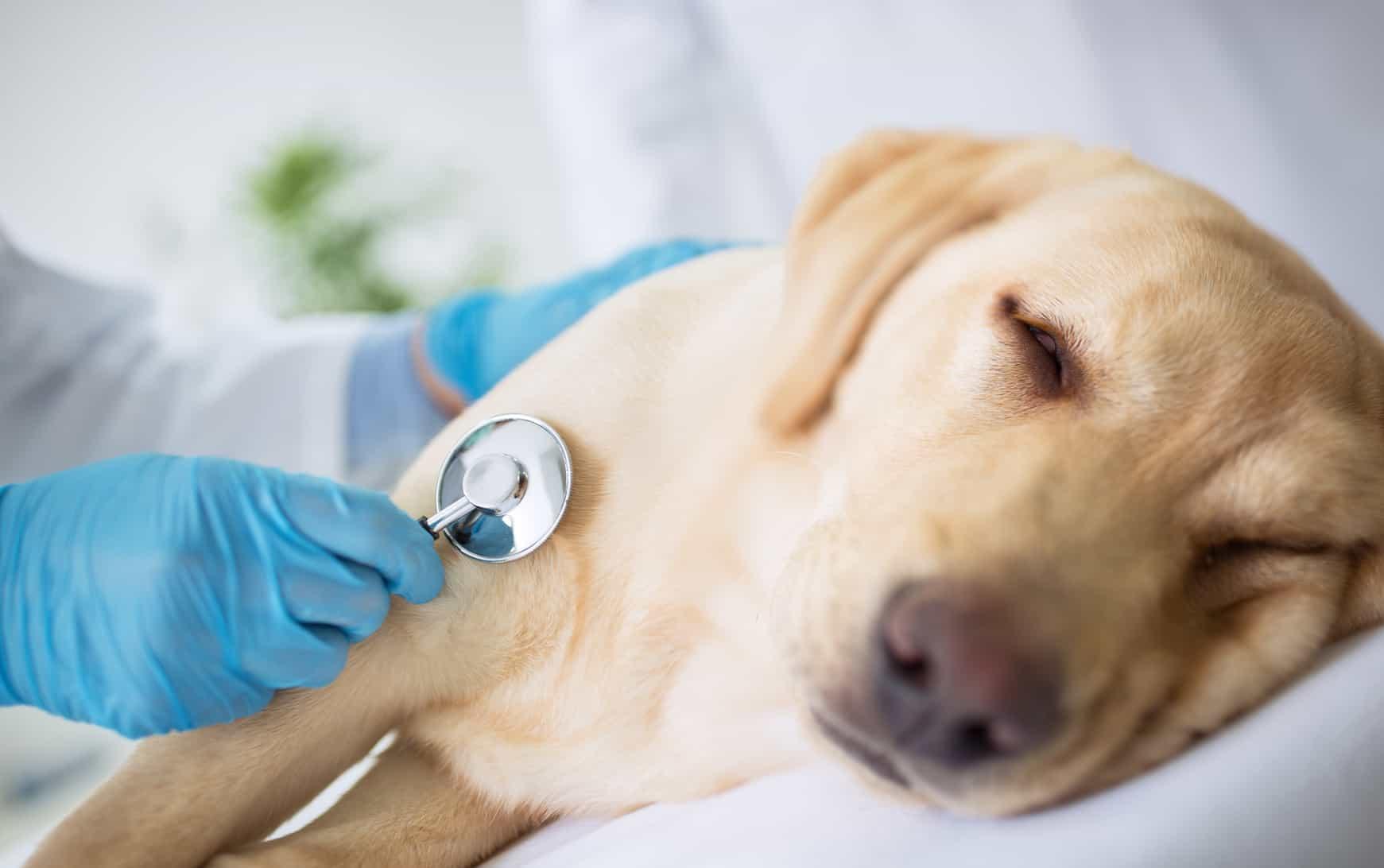 Nên cho chó đến trạm thú y để được khám