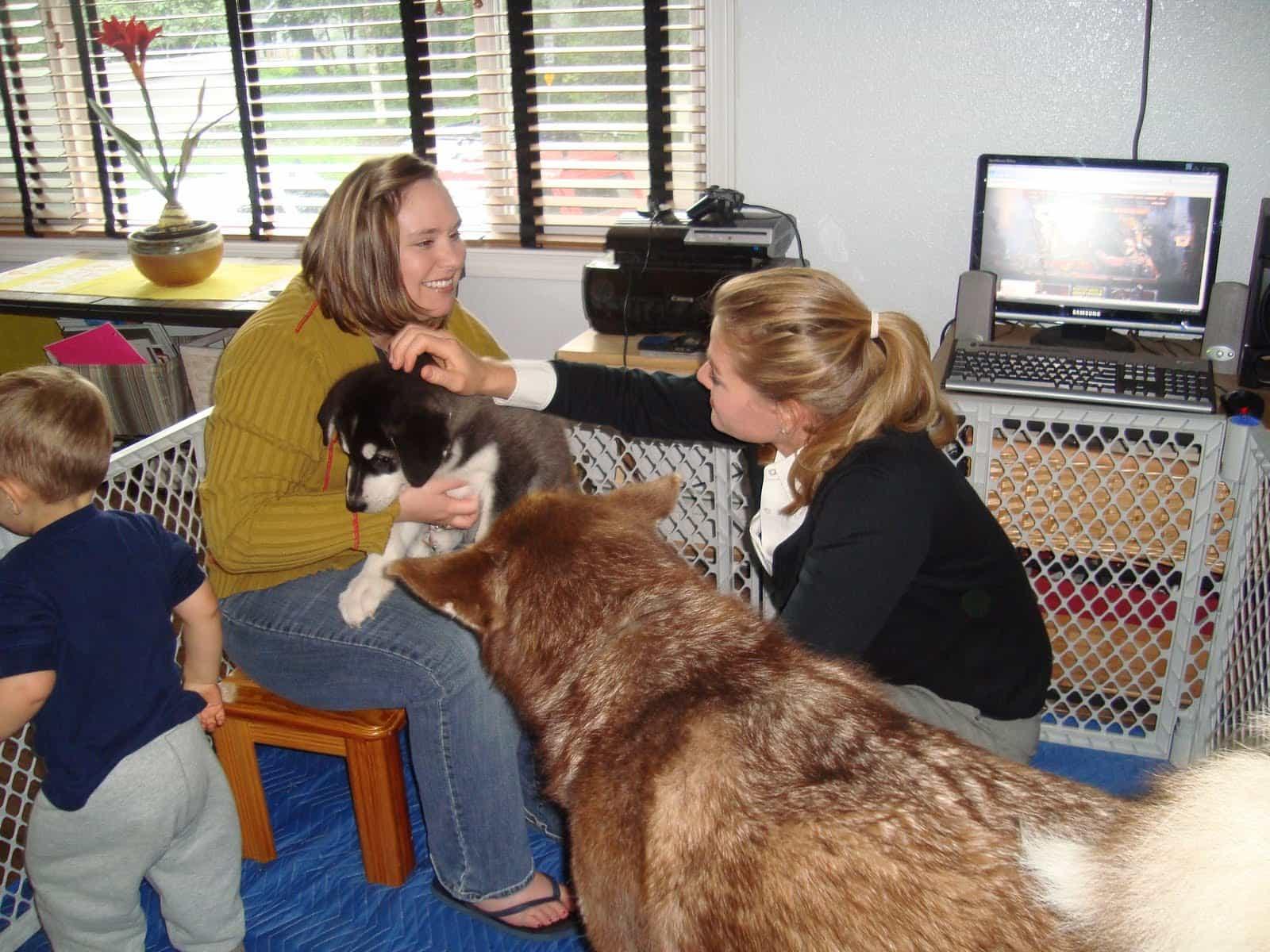 Những lời khuyên về ăn uống dành cho chó Alaska
