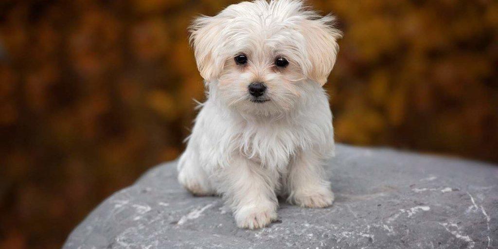 rụng lông và ngứa ở chó cần điều trị ở bác sĩ
