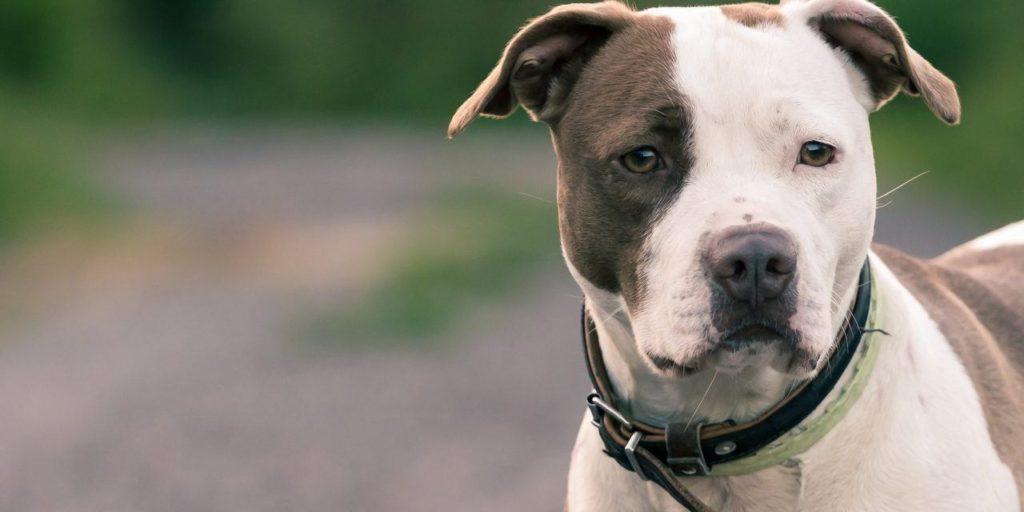rụng lông và ngứa ở chó cần được quan tâm đúng cách