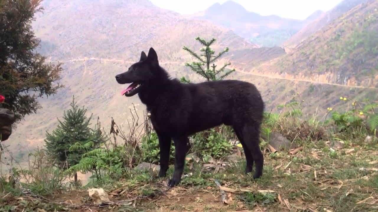 Sức khỏe của chó Mông Cộc
