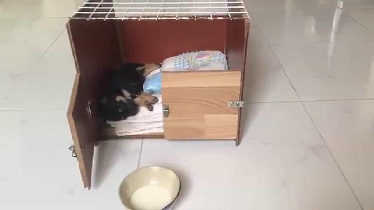 Tạo chỗ ngủ sạch sẽ cho chó