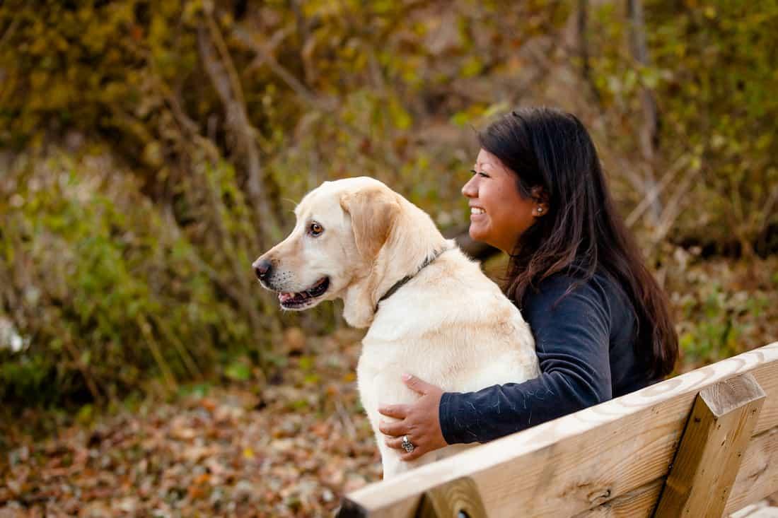 Thú nuôi chó Labrador