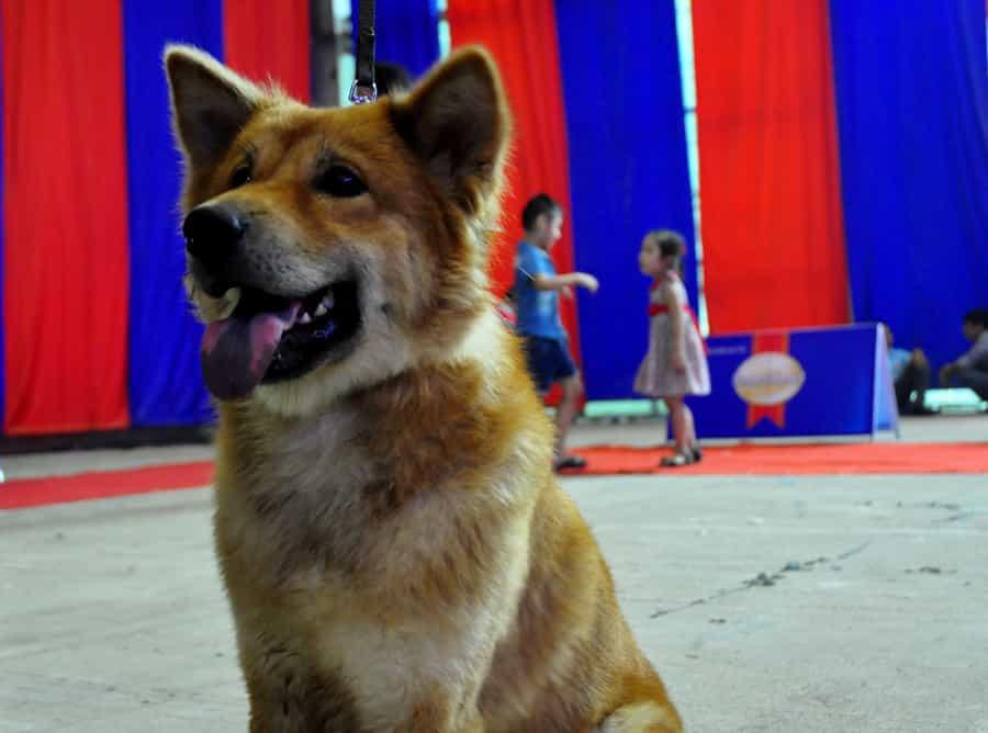 Tính cách của chó Bắc Hà